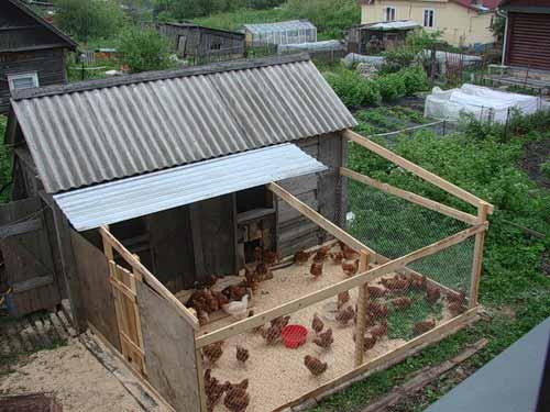 Сарай для цыплят своими руками